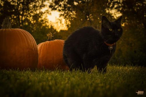 halloweenkitty1