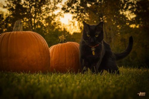 halloweenkitty2